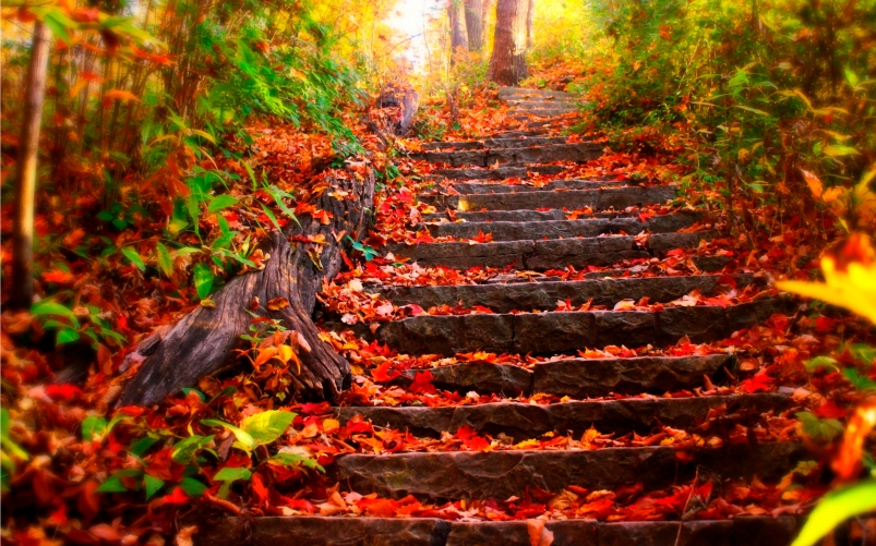 Autumn-steps